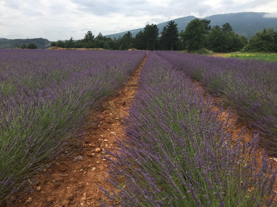 Pure essential oils from Provence